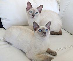 chaton de 1 mois