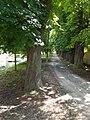Chestnut alley, Primate's Island, Esztergom, Hungary.jpg