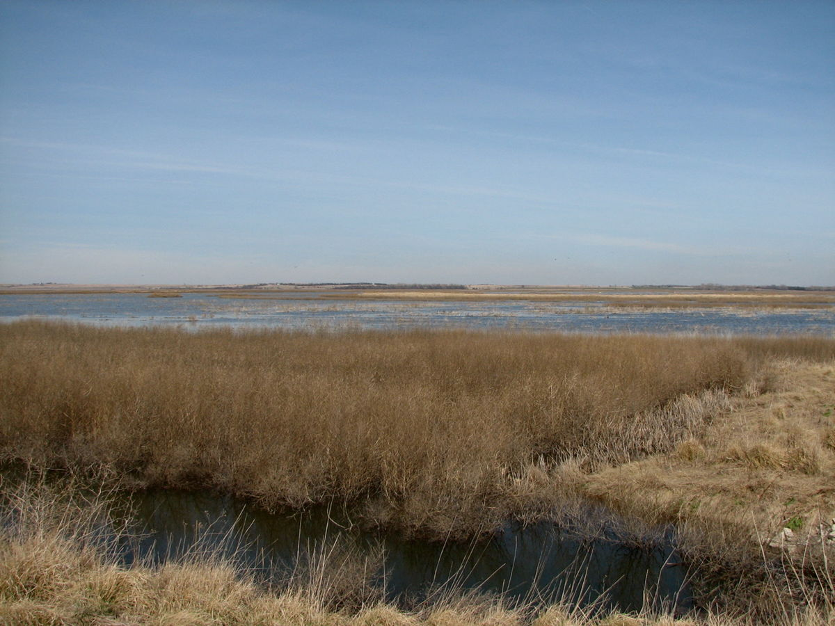 Cheyenne bottoms wildlife area foto 13