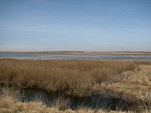 A photo of the shallow marshes at Cheyenne Bot...