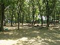 Chickamauga Campsite Camp Freeland Leslie Oxford Wisconsin.jpg