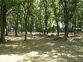 Chickamauga Campsite Camp Freeland Leslie Oxford Wisconsin.jpg