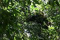 Chimp's Nest.jpg