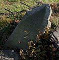 Cieszowa cmentarz żydowski macewa21 21.10.2012 p.jpg