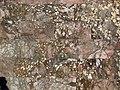 CivitavecchiaTermeTaurineSalaConEsedraPavimentoAfricano.jpg