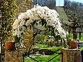 Clematis armandii Badefols-sur-Dordogne.jpg