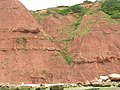 Cliffs at Orcombe Point - geograph.org.uk - 996660.jpg