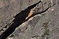 Climbers (26582952922).jpg