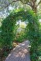 Clitoria ternatea - Marie Selby Botanical Gardens - Sarasota, Florida - DSC01628.jpg