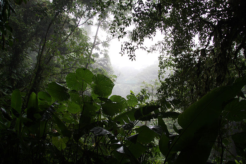 Monteverde Cloud Forest Reserve - costa rica