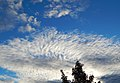 Clouds and blue sky over Federal Way.jpg