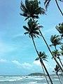 Coconut Tree Hill (2).jpg