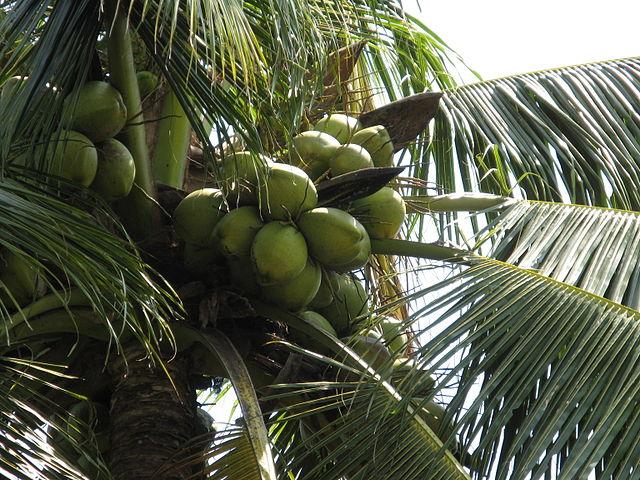 Propiedades y usos cosméticos del aceite de coco