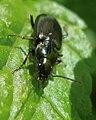 Coleoptera (3459928788).jpg