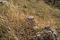 Coll de Panissars 2013 07 21 21 M8.jpg