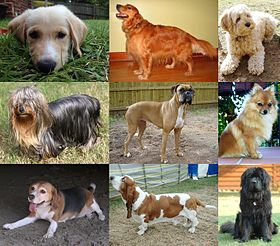 Nine different breeds of dogs.