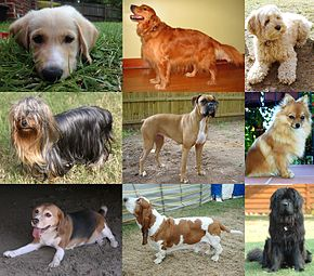 Descripcion de l'imatge  Collage of Nine Dogs.jpg.