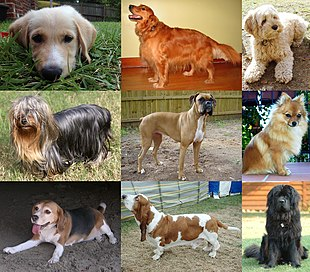 """Nine different <a href=""""http://search.lycos.com/web/?_z=0&q=%22dog%20breed%22"""">breeds of dogs</a>."""