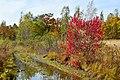 Colors of the far Eastern autumn. 01.jpg
