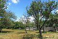 Conacul si parcul Balioz Ivancea Orhei (8).jpg