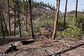 Continental Divide Trail - Flickr - aspidoscelis (45).jpg