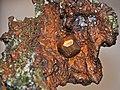 Copper crystal in copper mass (Mesoproterozoic, 1.05-1.06 Ga; Ahmeek, Upper Peninsula of Michigan, USA) 2 (17109562359).jpg