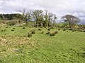 Cornavarrow Townland - geograph.org.uk - 1252698.jpg