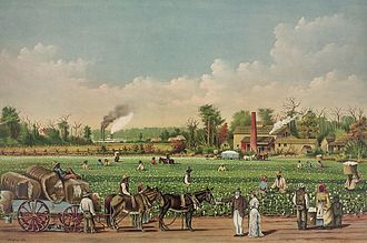 Plantations in the American South - A cotton plantation on the Mississippi, 1884 lithograph