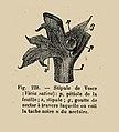 Cours apiculture-Bonnier-f228.jpg