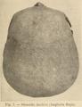 Cranio sfenoide.png