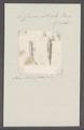 Criseis striata - - Print - Iconographia Zoologica - Special Collections University of Amsterdam - UBAINV0274 080 07 0019.tif