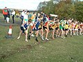 Cross country races near Goodwood - geograph.org.uk - 72758.jpg
