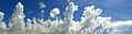 Cumulus congestus over Belize.jpg