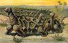 Saddle-backed Rodrigues Giant Tortoise