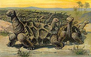 Saddle-backed Rodrigues giant tortoise - Drawing of a moving herd of Cylindraspis vosmaeri on Rodrigues
