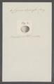 Cyrena depressa - - Print - Iconographia Zoologica - Special Collections University of Amsterdam - UBAINV0274 078 05 0004.tif