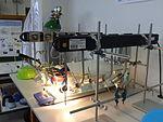 DLR School Lab Dresden (06).JPG