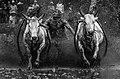 DSC 3027 wikimedia2020 deni dahniel Atraksi Pacu Jawi Minangkabau.jpg
