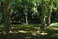 Dappled Shade Adelaide Botanic Garden.JPG