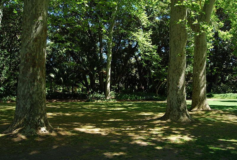 File dappled shade adelaide botanic garden jpg wikimedia for Garden trees adelaide