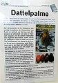 Dattelpalme II.jpg