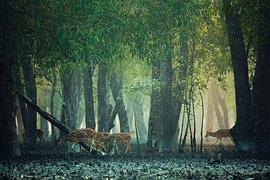 Deep in the Sundarban.jpg
