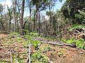 Degradação Florestal Amazônia 28.jpg