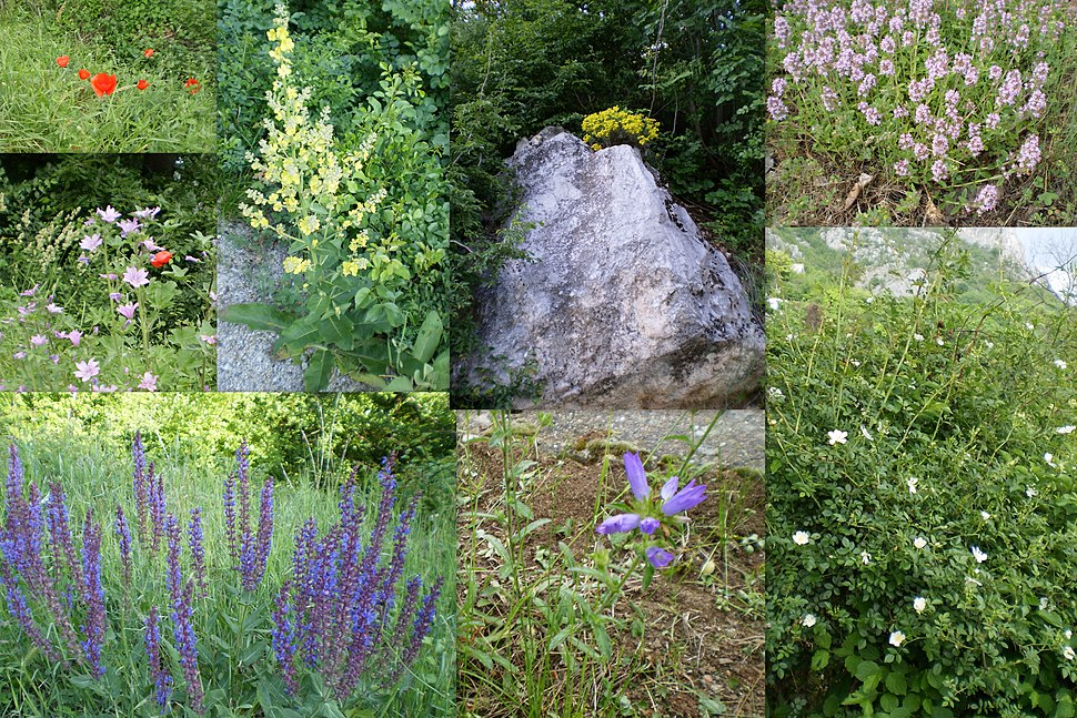 Deo flore Sicevacke klisure