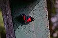 Descanso da borboleta.jpg