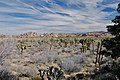 Desert Landscape, Joshua Tree (5291849651).jpg
