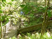 Boardwalk at The Devil's Millhopper