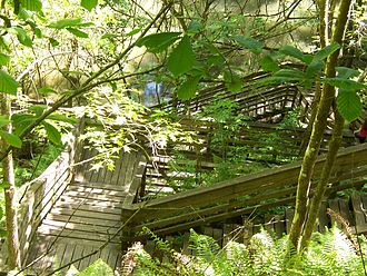 Florida State Parks in Alachua County - Boardwalk leading down to the sinkhole's observation deck