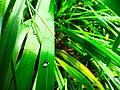 Dew on the grass.jpg