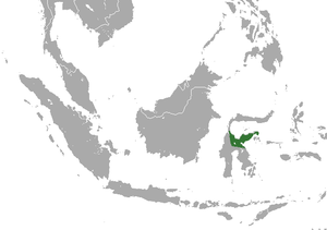Dian's tarsier - Image: Dian's Tarsier area